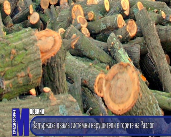 Задържаха двама системни нарушители в горите на Разлог