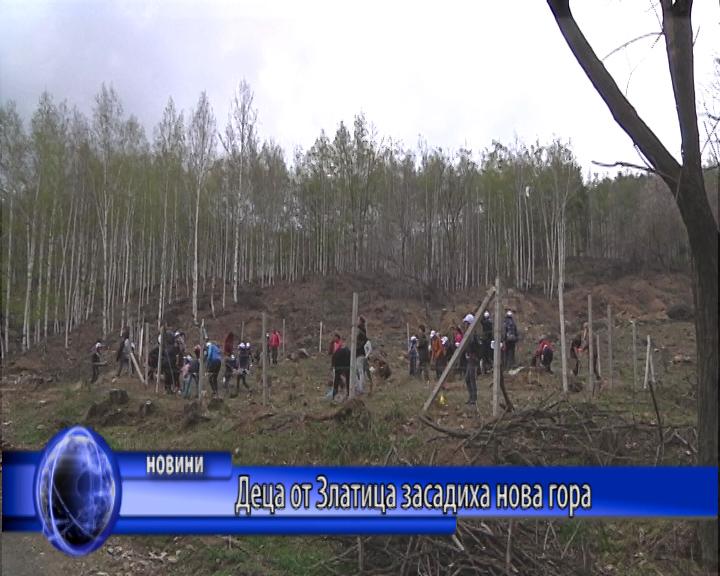 Деца от Златица засадиха нова гора