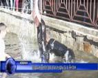 Йордан Пилитов спаси кръста в Антон