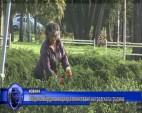 Община Пирдоп инициира почистване на градската градина
