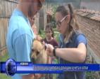 В Копривщица чипираха домашни кучета и котки