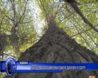 ЮЗДП и природозащитници правят проверки в горите