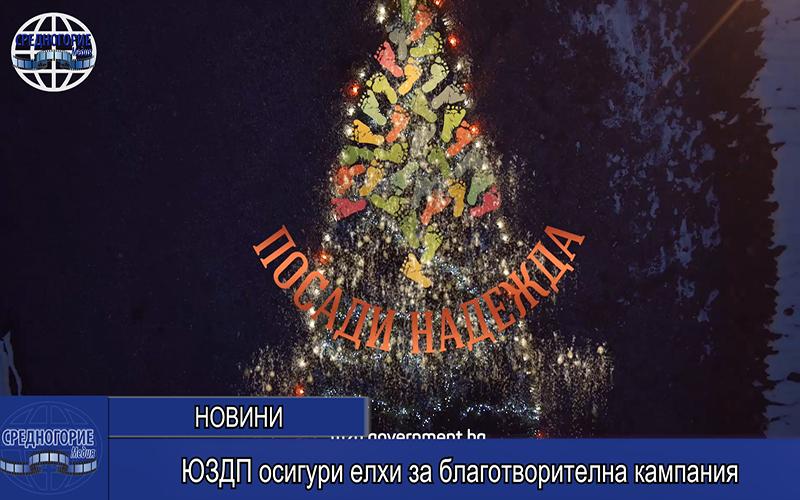 ЮЗДП осигури елхи за благотворителна кампания