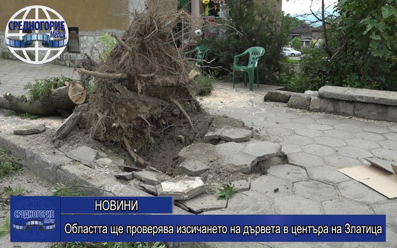 Областта ще проверява изсичането на дървета в центъра на Златица