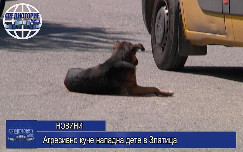Агресивно куче нападна дете в Златица