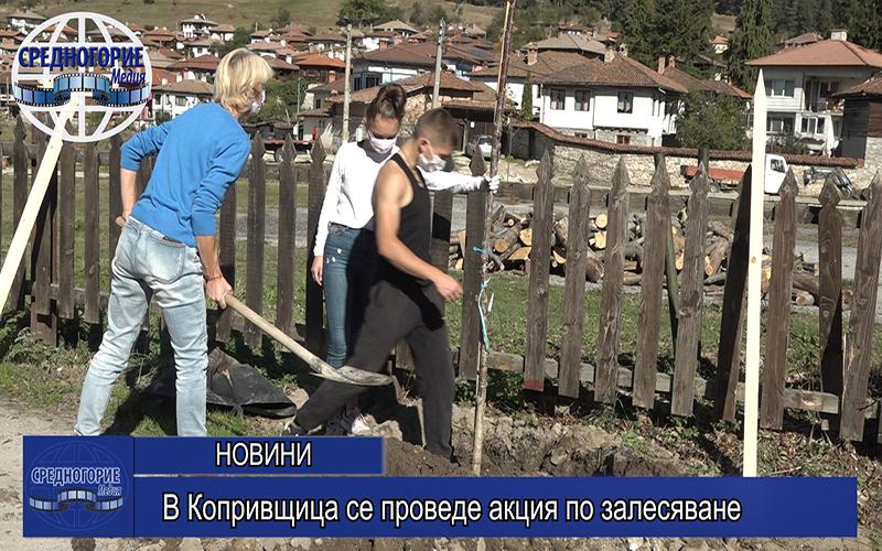 В Копривщица се проведе акция по залесяване