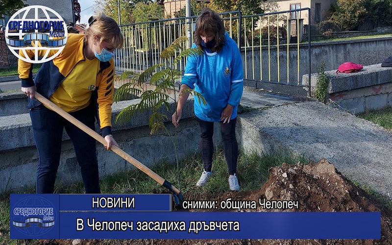 В Челопеч засадиха дръвчета