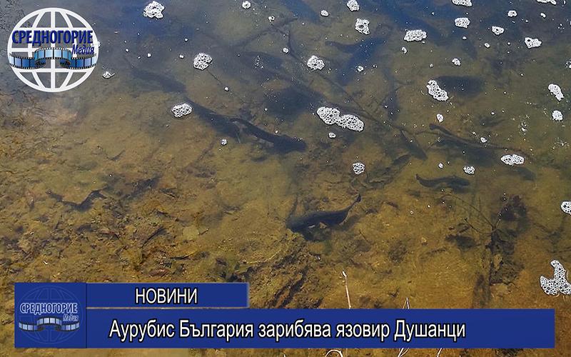 Аурубис България зарибява язовир Душанци